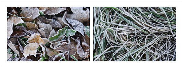 First Frost (c)2009 by April Siegfried