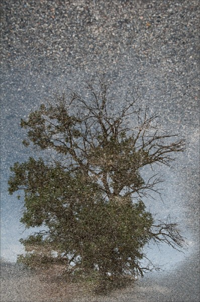 Reflection of a tree in a puddle on asphalt.