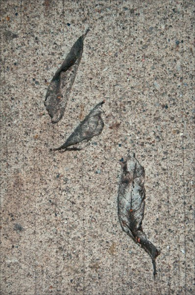 Impressions of fallen leaves in a concrete sidewalk