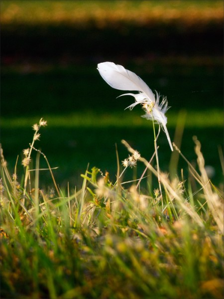 A single white feather suspended among autumn grasses.