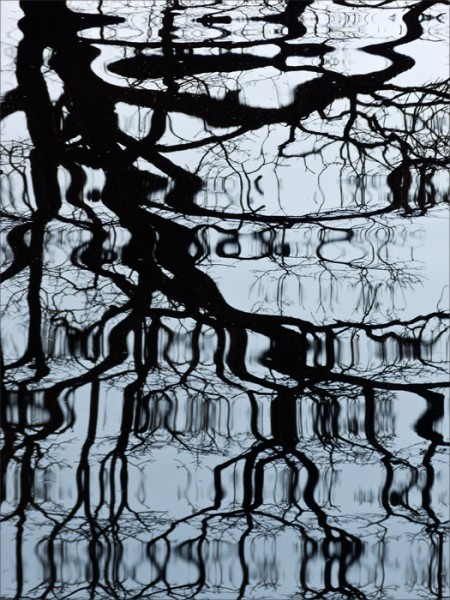 Silhouette of a bare tree reflected in water with stretched bands of ripples.