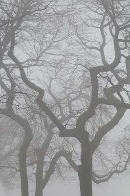 Fog №3